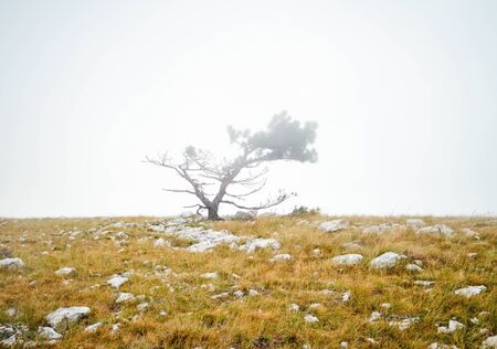 lonely tree in the mist among the stones Stock fotó