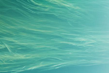 Abstraction of algae and floating grass. Reklamní fotografie