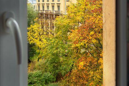 window view of autumn trees with colorful bright foliage Zdjęcie Seryjne