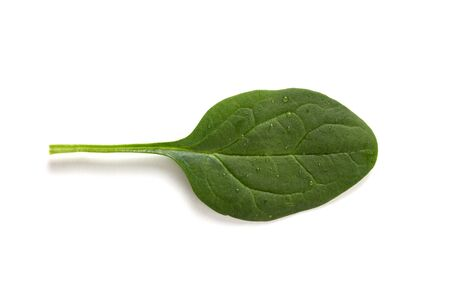 Green spinach leaf with drops of water on a white background. Healthy food