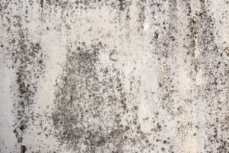 Old concrete wall in mold. Ceiling texture after long leaks Imagens