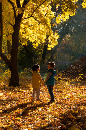 Happy children walking in the autumn park holding hands in the glow of the backlight