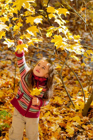 Little beautiful girl in a striped sweater plucks maple leaves in autumn park