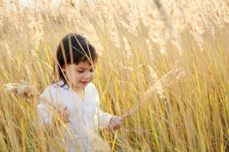 little girl walks on the field, and holds broken spikelets grass in his hands