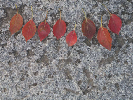 Red leaves on stone Stock Photo