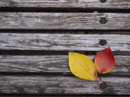 Two pieces of fallen leaves on the bench Stock Photo