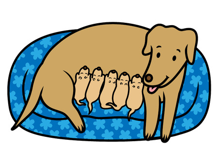 breast comic: Vector illustration of female dog breast feeding her new born puppies in bed at home Illustration