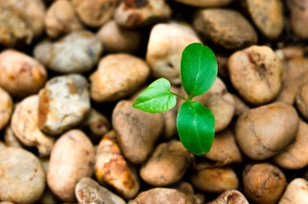 Seedlings growing on pebble