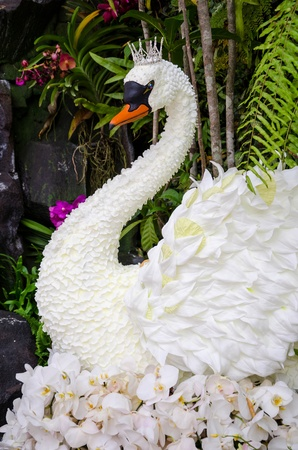 invented: The White Swan Queens was invented by flowers  And displayed at department stores in Thailand