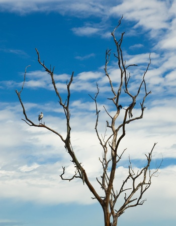 White bird perched on a dead tree and blue sky background