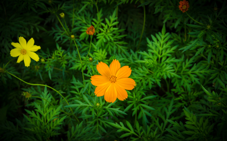 small orange flowers, top of the bush