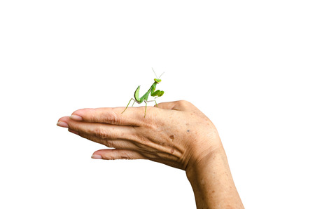 Close up of praying mantis on old woman hand  Stock Photo