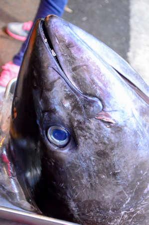 魚の頭 写真素材 - 43580124