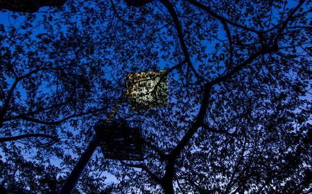 goverment: Street Light above the leaves