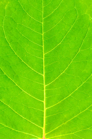 Green saturated green leaf close-up. Vertical