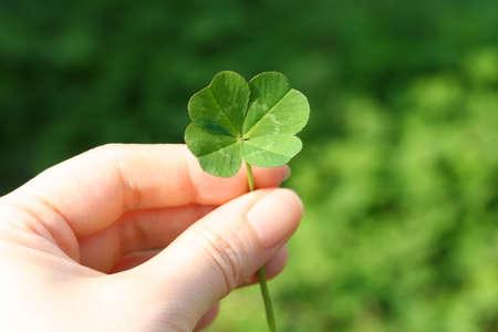 Esta es una imagen de un trébol de cuatro hojas natural