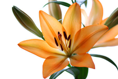 Orange lily photo