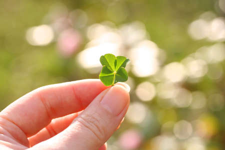 four leaf clover 写真素材 - 27570166