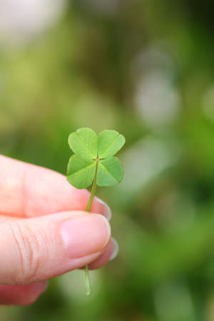 four leaf clover 写真素材