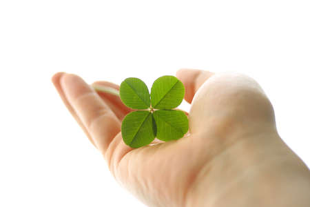 A four leaf clover in hand