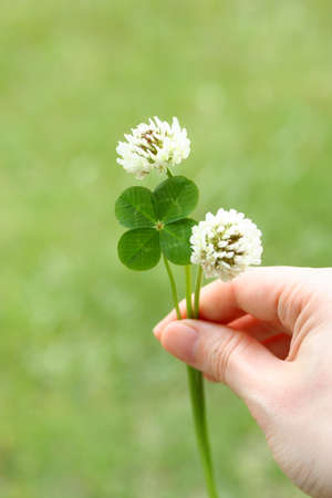Four leaf clover and flowers photo