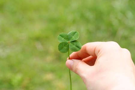 four leaf: Un tr�bol de cuatro hojas en la mano Foto de archivo