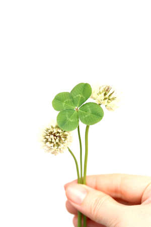 Four leaf clover and flowers Stock Photo - 28416890
