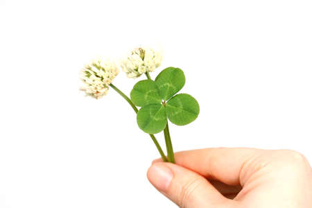 Four leaf clover and flowers Stock Photo