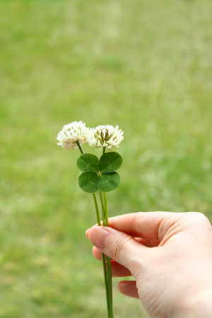 four leaf: Tr�bol de cuatro hojas y flores Foto de archivo