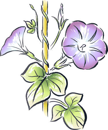 나팔꽃 일본식의 잉크 그림 일러스트