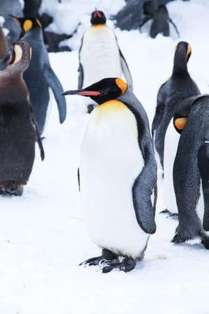 Penguin penguin, Asahikawa, Hokkaido
