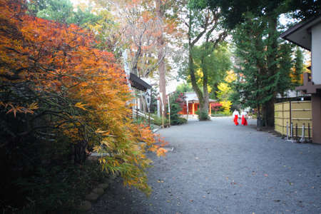 In a corner of the shrine in Japan autumn gods Palace