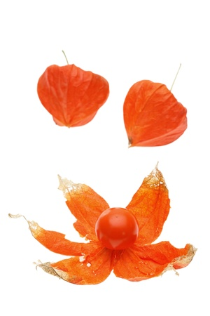 alkekengi: Physalis alkekengi isolated on a white background