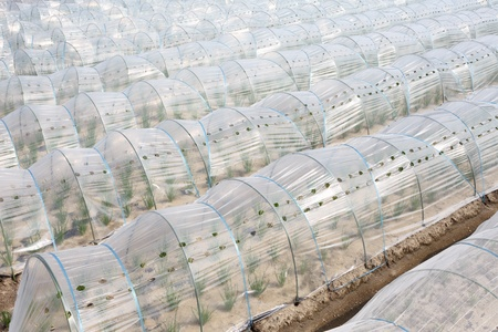 Vegetable greenhouse photo