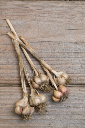 Organic garlic on wooden table Stock Photo - 14520122