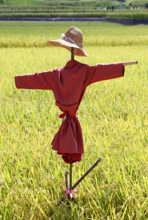 Scarecrow on the rice field in japan photo