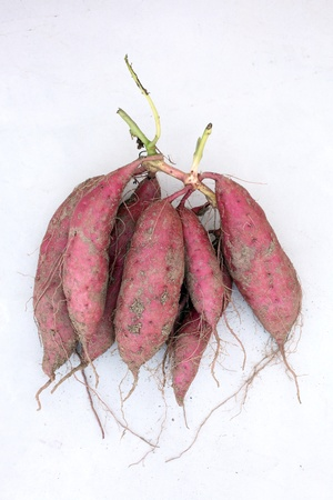 sweet potato plant with tubers in soil dirt surface Stok Fotoğraf