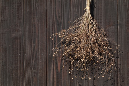 dry herb plant bunch hang on a wood wall photo