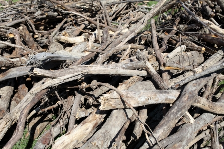 lumbering: Many old waste wood on a lumbering site