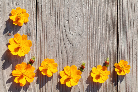 cosmos flowers create a frame on old wooden background photo