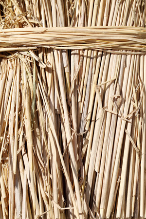 close up of rice paddy straw, texture background photo