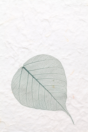 green skeleton leaf pressed rice paper photo