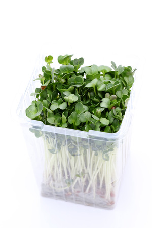radish sprouts in a plastic container Stock Photo - 25234036