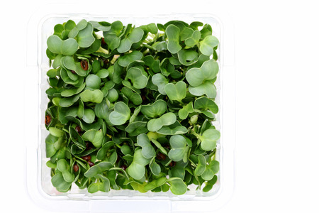 radish sprouts in a plastic container Stock Photo - 25234088