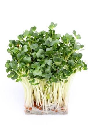 Radish sprout isolated on white background