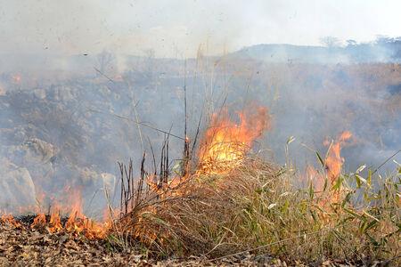 bush fire: Huge bush fire at the mountain in Japan