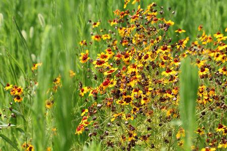 fading: 코스모스 꽃 페이딩