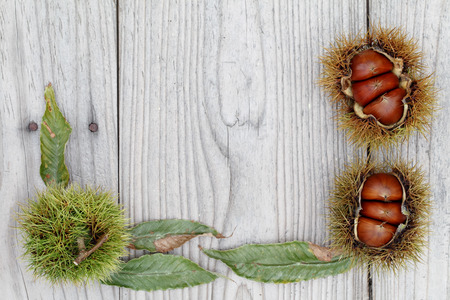 fresh chestnuts bur on a wooden background photo
