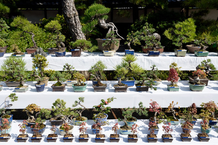 Row of bonsai trees at a japanese garden
