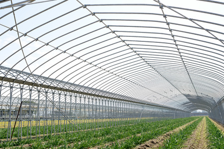 農業野菜の農業の建物 写真素材 - 33303617